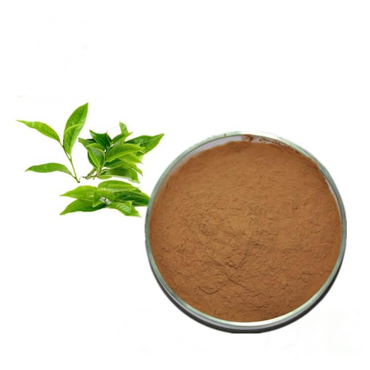 zelený čaj extrakt prášek